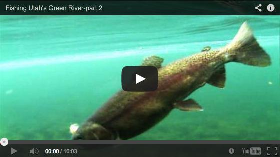 Video fly fishing utah s green river below flaming gorge for Green river utah fishing report
