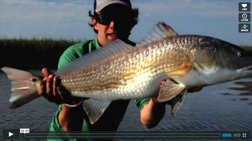 Video fly fishing for redfish in spring creek reds the for Fly fishing for redfish