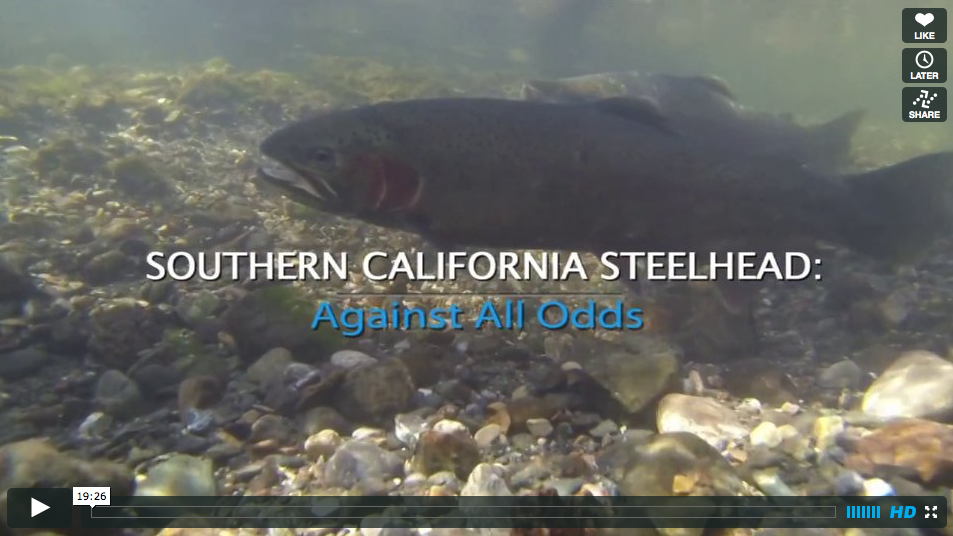 Full length fly fishing film southern california for Trout fishing southern california
