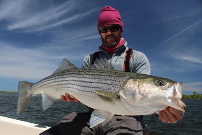 Eliot Jenkins Striped Bass