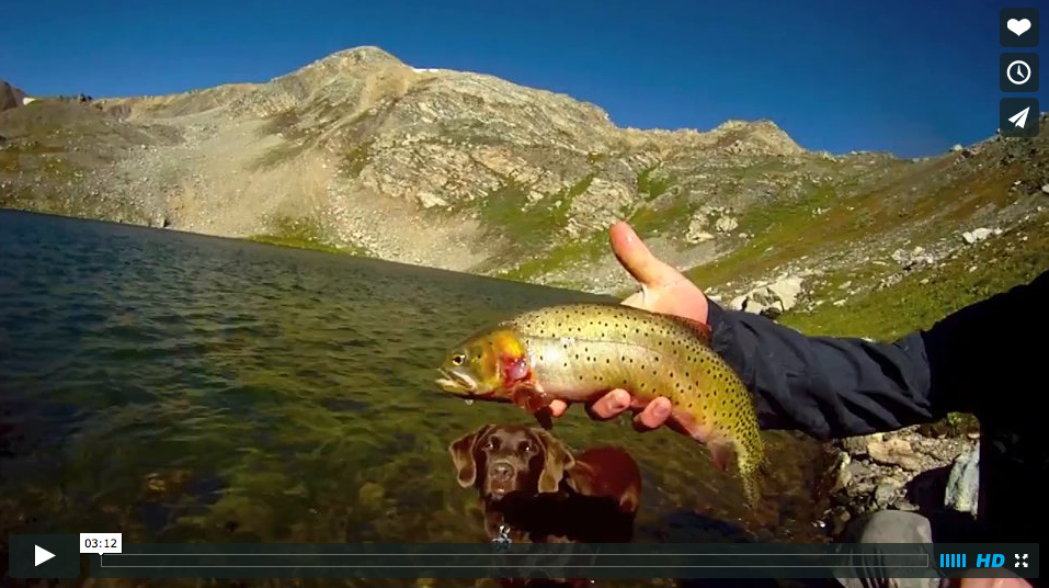 Video: High Mountain Lake Wild Cutthroat Trout in Colorado ...