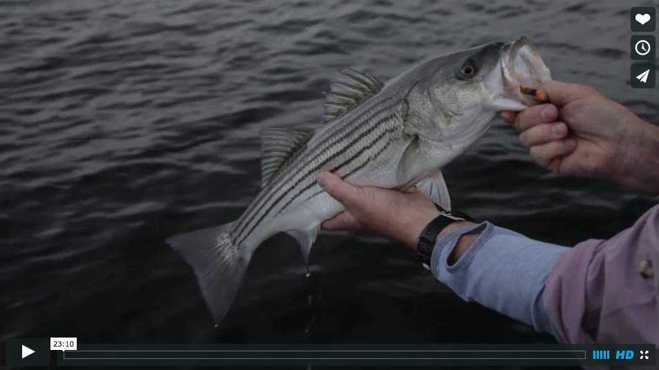 Video fly fishing for rhode island striped bass with for Ri fishing charters