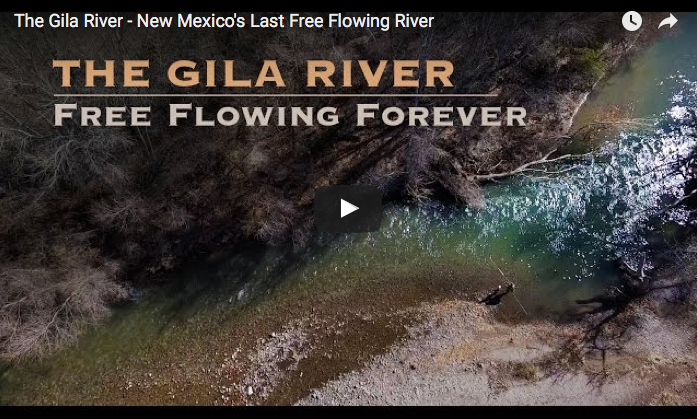 Video protecting the gila river in new mexico the for Gila river fishing