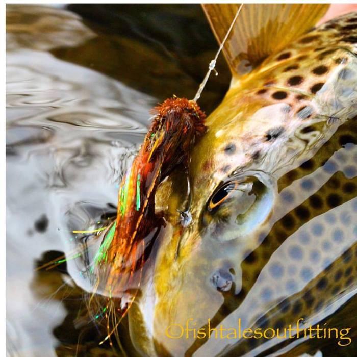 FishTales Montana trout