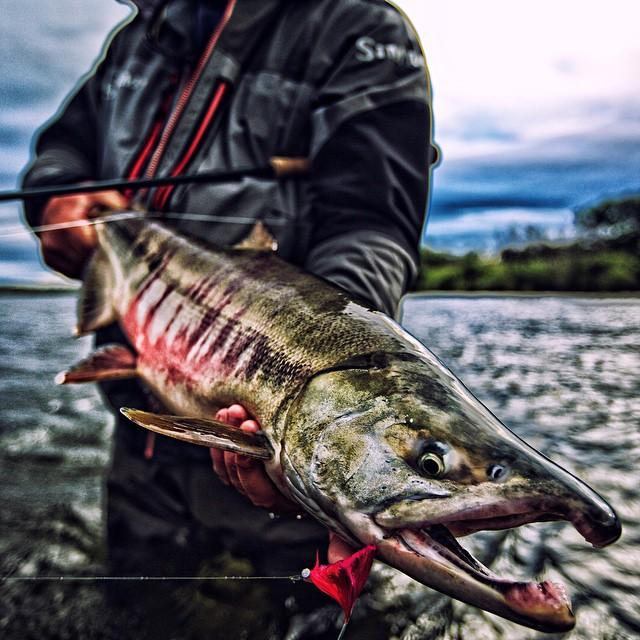 Anglers Alibi chum salmon