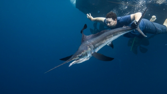 Colby Trow Marlin