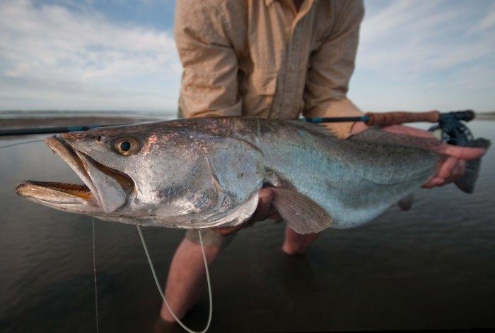Laguna Madre sea trout
