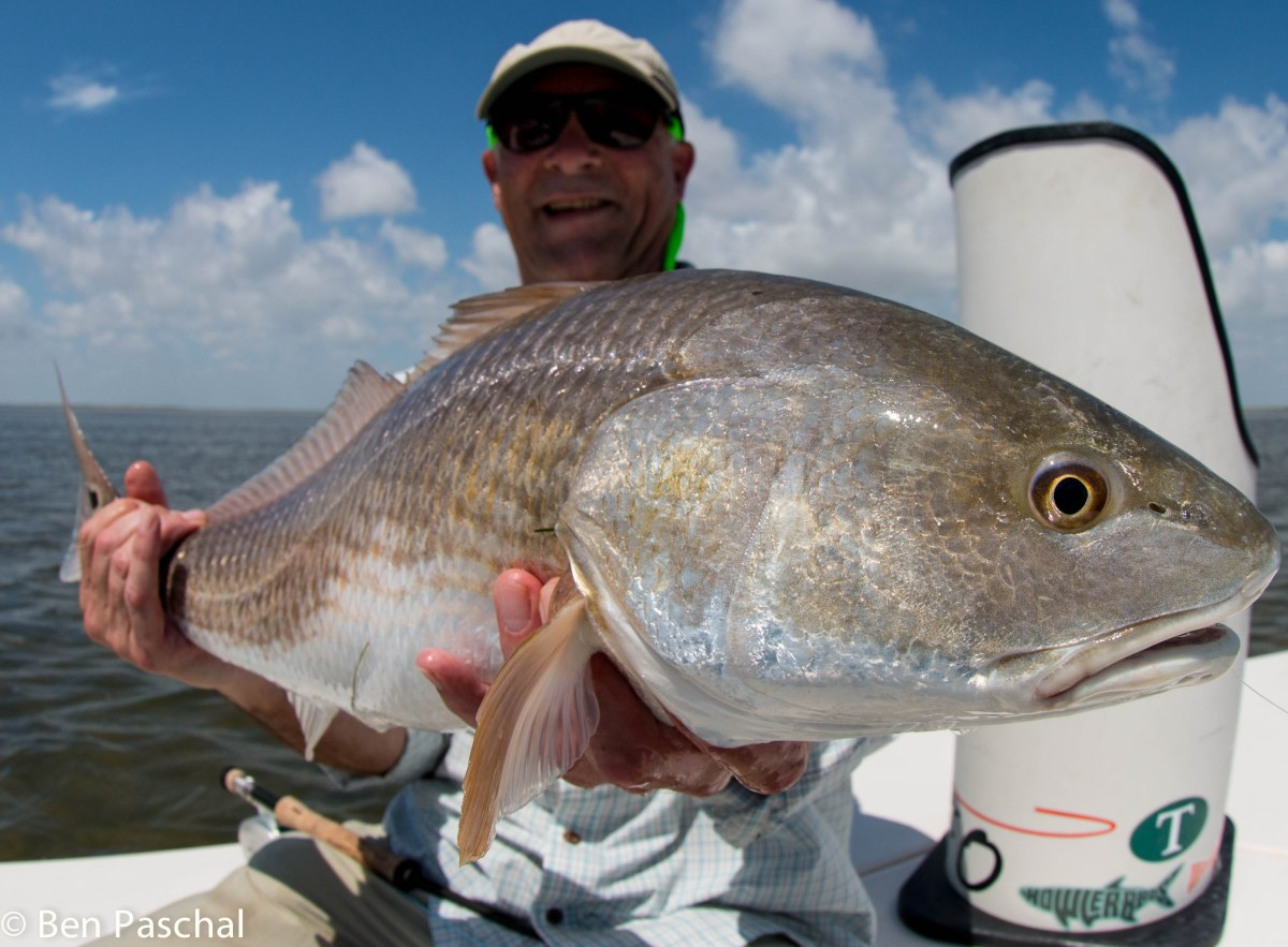 Fly fishing photo bull redfish on the fly the venturing for Fly fishing for redfish