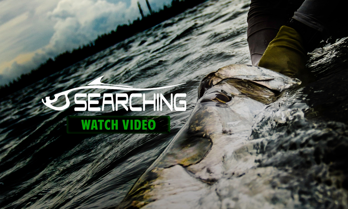Fly fishing film pursuing tarpon on the fly in searching for Fly fishing films