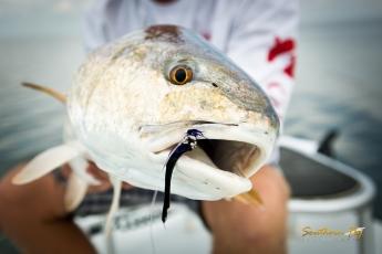 louisiana-redfish