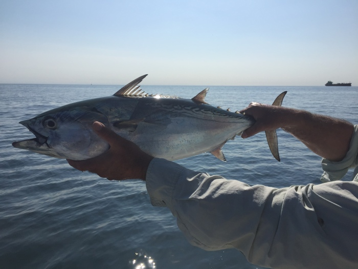 Peter Corrao of FlyLight Charters albacore